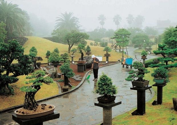 Картинки по запросу Jeju's Spirited Garden